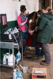 endoscope up a horse's nose