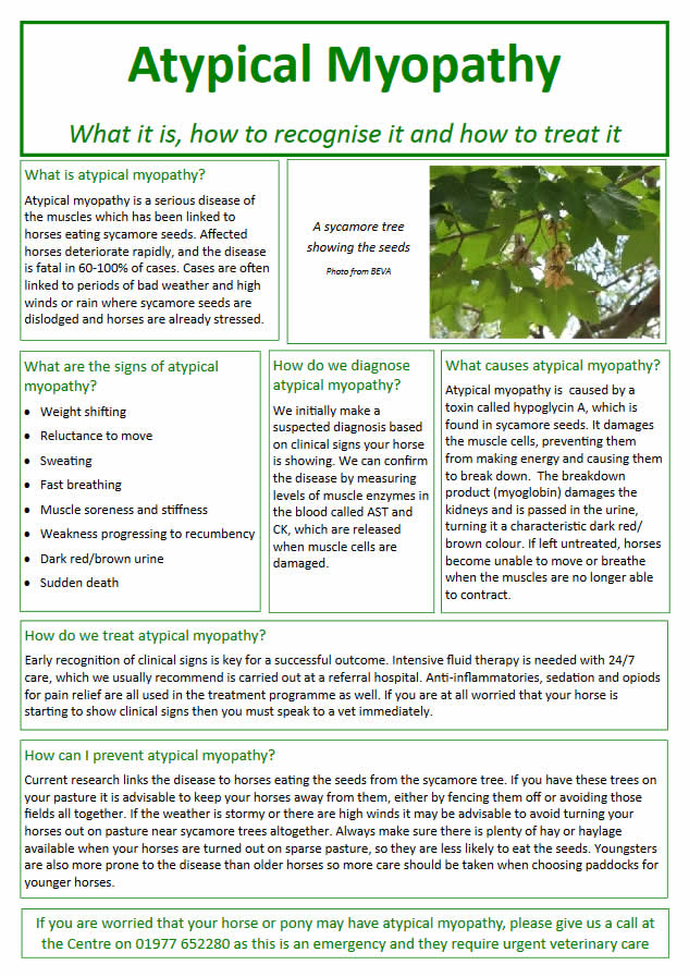 atypical myopathy information sheet in horses