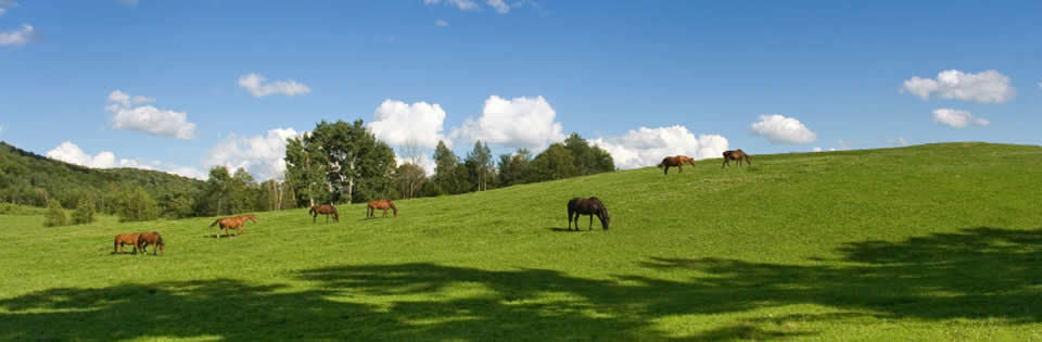 Horses in a grass field