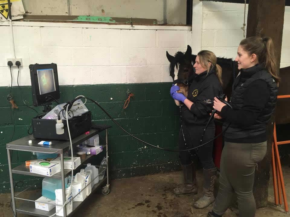 scoping horse