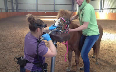 The importance of a trained equine dentist