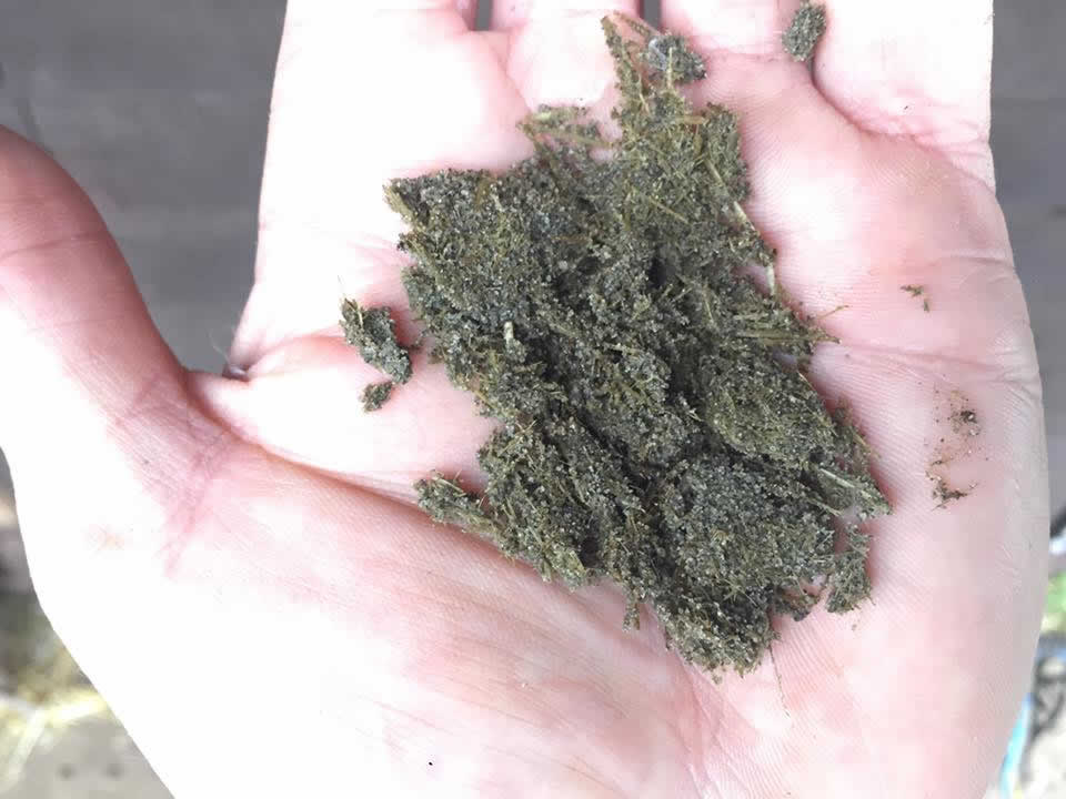 Sand ingestion of horse from Equine Veterinary Centre