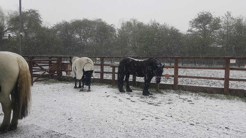 Snow at Equine Veterinary Centre showing snow on the horses