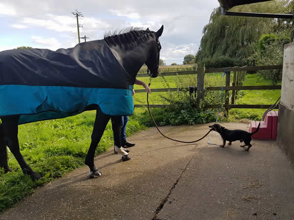 Dog and horse