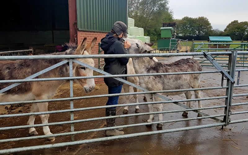 vet and donkey